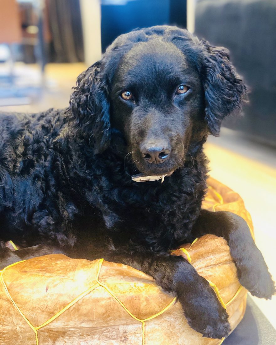 Karma er en fin hund