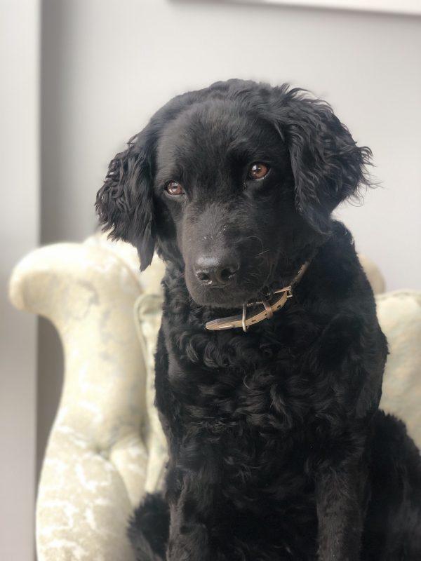 Karma, the dog of the house
