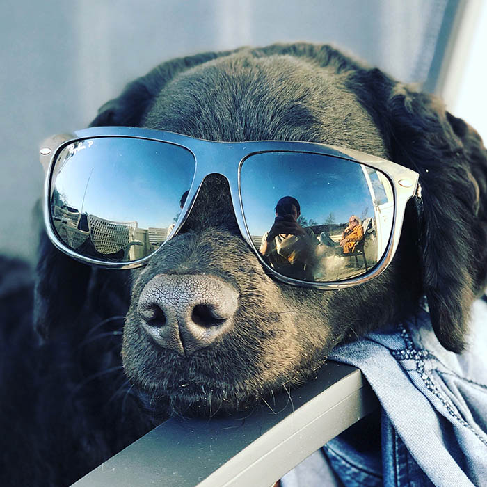 Karma in the sun wearing sunglasses