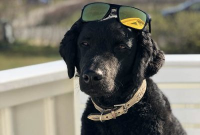 Karma with sunglasses